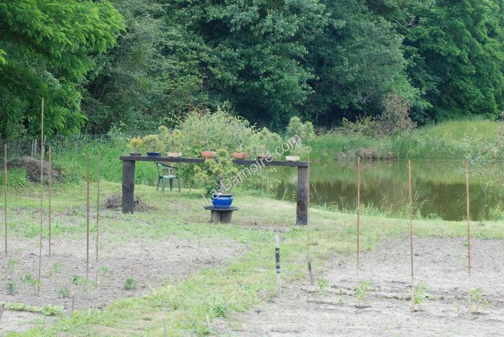 The bonsai display near the pond