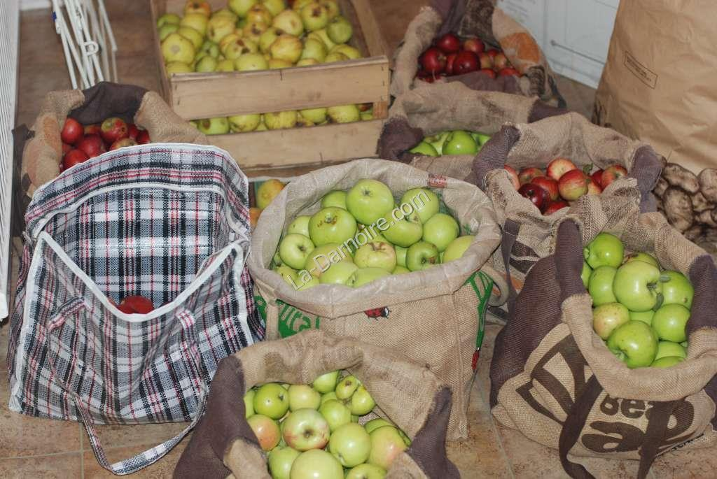 Apples intended for cider